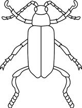 Imprimer le coloriage : Insectes, numéro 130344