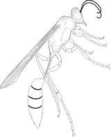 Imprimer le coloriage : Insectes, numéro 130362
