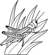 Imprimer le coloriage : Insectes, numéro 142535