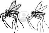 Imprimer le coloriage : Insectes, numéro 142538