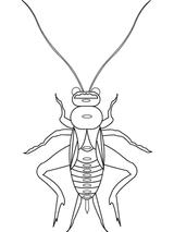 Imprimer le coloriage : Insectes, numéro 147100