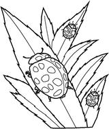 Imprimer le coloriage : Insectes, numéro 147101