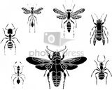 Imprimer le coloriage : Insectes, numéro 147103