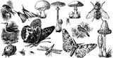 Imprimer le coloriage : Insectes, numéro 147104