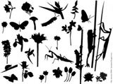 Imprimer le coloriage : Insectes, numéro 147105