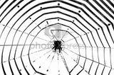 Imprimer le coloriage : Insectes, numéro 147110