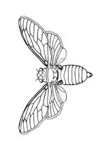 Imprimer le coloriage : Insectes, numéro 147113