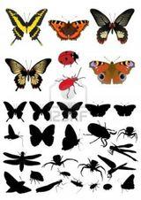 Imprimer le dessin en couleurs : Insectes, numéro 158366