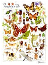 Imprimer le dessin en couleurs : Insectes, numéro 158370