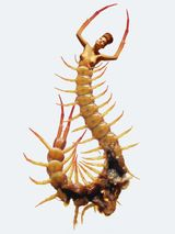 Imprimer le dessin en couleurs : Insectes, numéro 158382