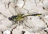 Imprimer le dessin en couleurs : Insectes, numéro 158384