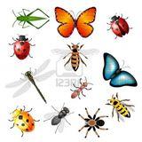 Imprimer le dessin en couleurs : Insectes, numéro 165826