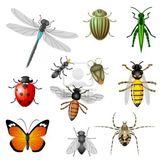 Imprimer le dessin en couleurs : Insectes, numéro 194715
