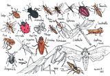 Imprimer le dessin en couleurs : Insectes, numéro 197757