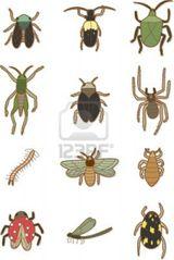 Imprimer le dessin en couleurs : Insectes, numéro 197758