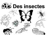 Imprimer le coloriage : Insectes, numéro 219965
