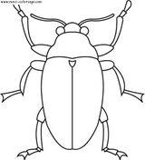 Imprimer le coloriage : Insectes, numéro 23796