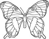 Imprimer le coloriage : Insectes, numéro 23801