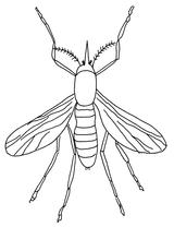 Imprimer le coloriage : Insectes, numéro 23803