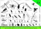 Imprimer le dessin en couleurs : Insectes, numéro 247227