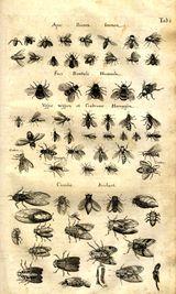 Imprimer le dessin en couleurs : Insectes, numéro 24787