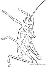 Imprimer le coloriage : Insectes, numéro 25661