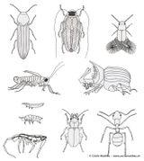 Imprimer le dessin en couleurs : Insectes, numéro 498822