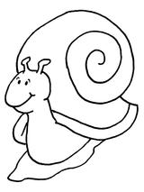 Imprimer le coloriage : Insectes, numéro 55792