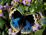 Imprimer le dessin en couleurs : Insectes, numéro 684405