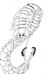 Imprimer le coloriage : Insectes, numéro 83936