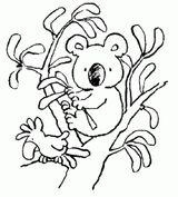Imprimer le coloriage : Koala, numéro 11ed68aa