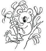 Imprimer le coloriage : Koala, numéro 13693520