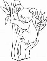 Imprimer le coloriage : Koala, numéro 1402cc79