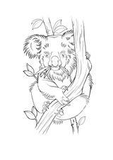 Imprimer le coloriage : Koala, numéro 23146675