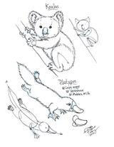 Imprimer le coloriage : Koala, numéro 328c8c78