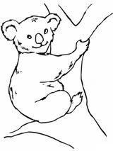 Imprimer le coloriage : Koala, numéro 32ffa552