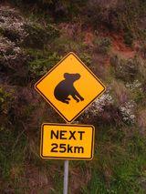 Imprimer le dessin en couleurs : Koala, numéro 602447
