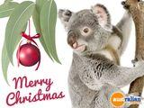 Imprimer le dessin en couleurs : Koala, numéro 624004