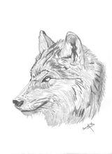 Imprimer le coloriage : Loup, numéro 128427