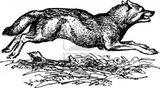 Imprimer le coloriage : Loup, numéro 145906