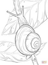 Imprimer le coloriage : Mollusques, numéro 1034984