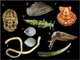 Imprimer le dessin en couleurs : Mollusques, numéro 296fd35