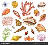 Imprimer le dessin en couleurs : Mollusques, numéro 39067c19
