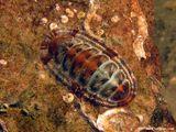 Imprimer le dessin en couleurs : Mollusques, numéro 396231