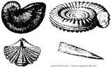 Imprimer le coloriage : Mollusques, numéro 398244