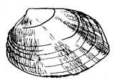 Imprimer le coloriage : Mollusques, numéro 398284