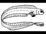 Imprimer le coloriage : Mollusques, numéro 419590