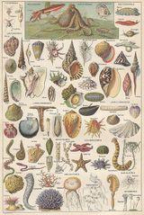 Imprimer le dessin en couleurs : Mollusques, numéro 430395