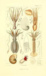Imprimer le dessin en couleurs : Mollusques, numéro 430398
