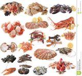 Imprimer le dessin en couleurs : Mollusques, numéro 4447e2e2